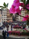 Spagna för Roma blommarosor plaza Arkivbilder