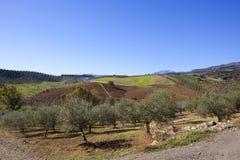 Spagnolo tradizionale che coltiva paesaggio di Andalusia Fotografia Stock