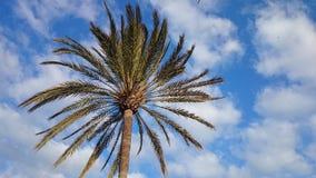 Spain. Beautiful palm tree in Benalmadena Costa Stock Photography