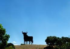 Spain bull Stock Image