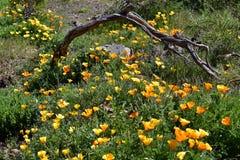 Spain, Canary Islands, Botany Royalty Free Stock Photos