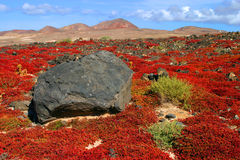 Spain, Canary Islands, Lanzarote, Teguise, volcanic stone and vegetation. Royalty Free Stock Photography