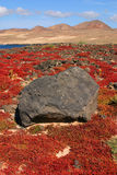 Spain, Canary Islands, Lanzarote, Teguise, volcanic stone and vegetation. Stock Photography