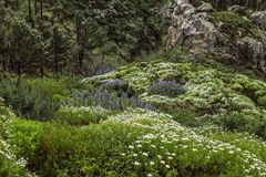 Spain, La Gomera, a walking paradise and UNESCO Biosphere Reserve. Considering La Gomera, a Island from Spain, has long been regarded as one of the most unspoilt stock images
