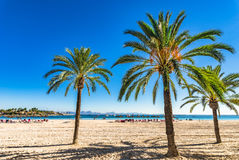 Platja d`Alcudia on Majorca beach with palm trees, Spain Mediterranean Sea. Spain Majorca beach of Alcudia with beautiful palm trees, Mediterranean Sea Royalty Free Stock Images
