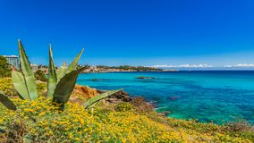 Picturesque seaside landscape of Cala Rajada on Mallorca island. Spain Majorca, beautiful Mediterranean Sea view at coast of Cala Ratjada Royalty Free Stock Photo