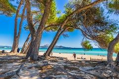 Spain Majorca, seaside beach at bay of Alcudia stock image