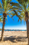 Spain Mallorca beautiful beach with palm trees at Alcudia. Spain Majorca sand beach with palm trees at Platja d`Alcudia, beautiful island scenery, Mallorca Royalty Free Stock Photography