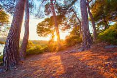 Spain nature. Pine forest at the sunrise. Clean ecological forest on Costa Dorada coastline. Spain resort. Summer tropical landscape royalty free stock image