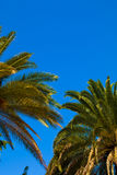 Spain. It presents different species of cactus, tropical plants and garden. Royalty Free Stock Images