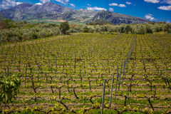 Spain vineyard area. One of the most productive culture of the vine stock images