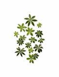 Spalter-Blätter stockfoto
