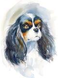 Spaniel короля Чарльза смотря вверх покрашенную руку иллюстрации породы собаки акварели животную Стоковая Фотография
