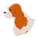 Spaniel do rei de Charles dos Cavalier da cabeça de cão ilustração do vetor