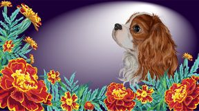 Spaniel dog realistic marigold dark. Realistically painted in vector head Cavalier King Charles spaniel sad dog framed by marigold garden flowers and leaves Royalty Free Stock Photos