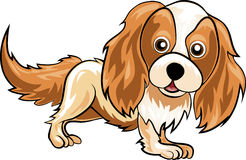Spaniel Stock Photography