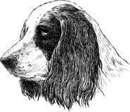 Free Spaniel Portrait Royalty Free Stock Image - 32956596