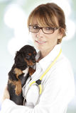 Spaniel puppy in front of a veterinarian doctor Royalty Free Stock Photo
