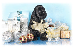 Spaniel puppy and gifts christmas. American Cocker Spaniel puppy and gifts christmas Royalty Free Stock Images