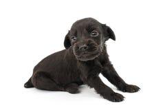 Spaniel puppy Stock Photo