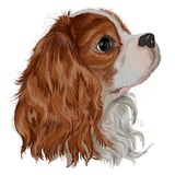 Spaniel Tim dog realistic. A realistically vector painted dog of the breed of Cavalier King Charles Spaniel, lovely, devoted kind dog, a bright picture of a Stock Photo
