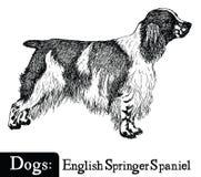 Spaniel van de de stijl het Engelse Aanzetsteen van de hondschets Royalty-vrije Stock Afbeelding