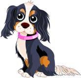 Spanielhund vektor illustrationer