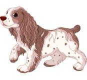 Spanielhund royaltyfri illustrationer
