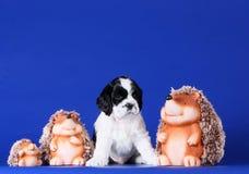 Spanielwelpe, der mit Spielwarenigelen auf einem blauen Hintergrund sitzt Lizenzfreie Stockfotos