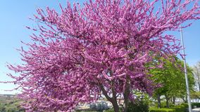 Spanien-Baumbetriebs- und -blumengarten Lizenzfreies Stockfoto