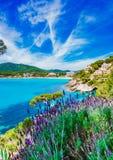 Spanien Majorca kust, pittoreskt naturlandskap på sjösidan av Canyamel royaltyfria foton