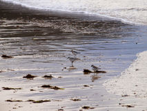 Spanien - Vogel auf dem Strand Stockfoto