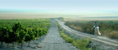 Spanisch-zu Pferde Mitfahrer überblickt seine Weinberge lizenzfreies stockfoto