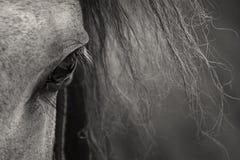 Spanische Augen Stockfotografie