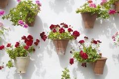 Spanische Blumen Lizenzfreie Stockbilder
