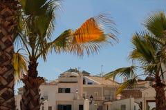 Spanische Häuser mit Palmen stockbilder