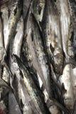 Spanische Makrele Stockbild