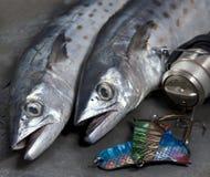 Spanische Makrele des neuen Hustens mit Fischen equipmen Stockfotos