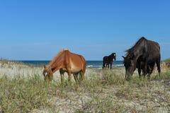 Spanische Mustangs Stockfotografie