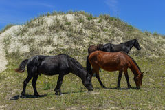 Spanische Mustangs Lizenzfreies Stockbild