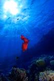 Spanische Tänzerfliege zu sonnen im Blau sich Lizenzfreie Stockfotos