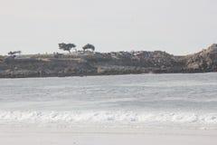 Spanischer Bucht-Strand in der pazifischen Bucht Pebble- Beachbereichs im Abstand, 17-Meilen-Antrieb, Kalifornien, USA Lizenzfreie Stockfotografie