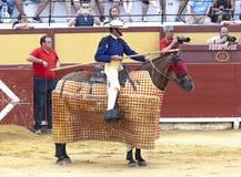 Spanischer Bullfight Pikador mit einer Stange auf einem Pferd Die erzürnten Stierangriffe der Stierkämpfer Spanien 2017 07 25 201 Stockfotos