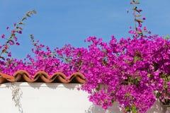 Spanischer Garten Stockbilder