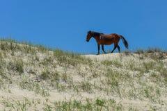 Spanischer Mustang Lizenzfreie Stockfotografie