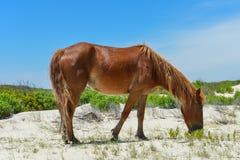 Spanischer Mustang Stockfotos