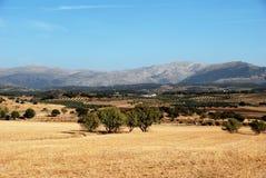 Spanisches Ackerland, Andalusien Stockbild