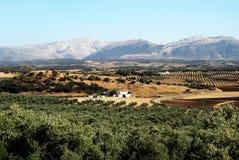 Spanisches Ackerland, Andalusien Lizenzfreie Stockfotos