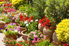 Spanisches Blumengartendetail in Spanien Stockfotos