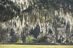 Spanisches Moos in den Leu-Gärten, Orlando, Florida Stockfotografie
